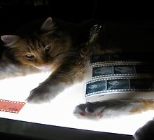 The Lightbox, the Cat and the Negatives by Jen Waltmon