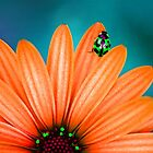 Bright Bug Green by Bronwyn Bruce