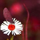 Red garden by Bronwyn Bruce