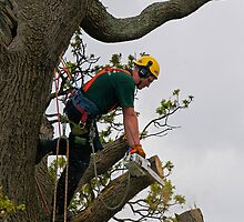 Tree surgeon cutting branch by buttonpresser