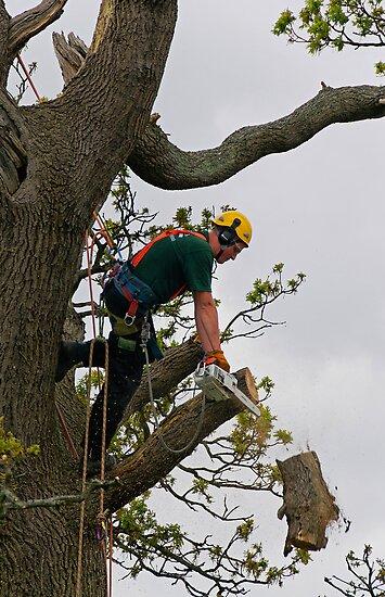 Tree surgeon cutting branch by buttonpresser