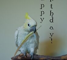 Birthday Bird by ElyseFradkin