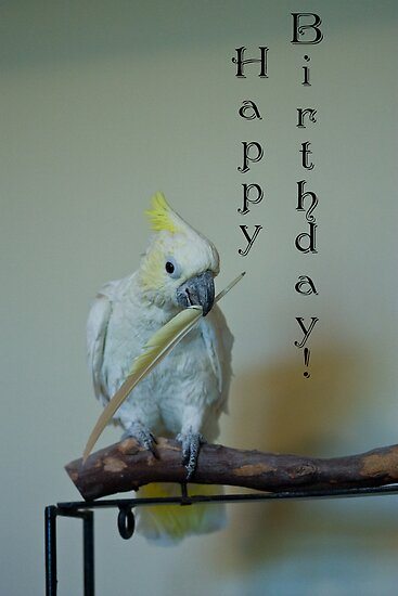 Birthday Bird by ElyseFradkin