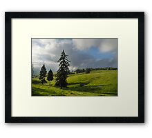 Three firs, Romania, Transylvania region  Framed Print