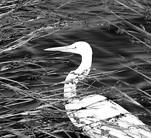 Criss-Cross Egret by Ray Schiel