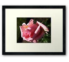 Aria Rose Framed Print