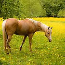 Horse in a field of yellow by photodivaanna