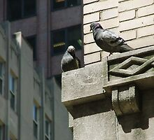 Birds of NYC! by Douglas  Alan