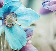 Himalayan blue by Anne Staub