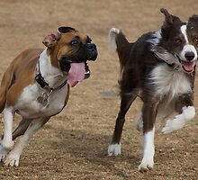 Come On, Race Me! by Peggy  Woods Ryan