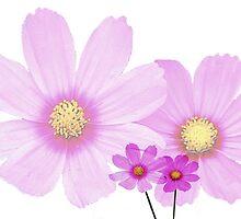 Flowers four..... by DaveHrusecky