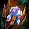 Flowers...Iris by  Janis Zroback