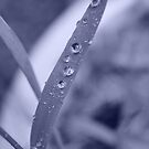 Man's life is like a drop of dew on a leaf. by Kirsten Moody