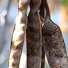 """Seedpods in the morning"" macro by Justine Walke"