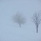 trees by yvesrossetti