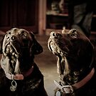 Wine Dogs  by Bec  Brindley
