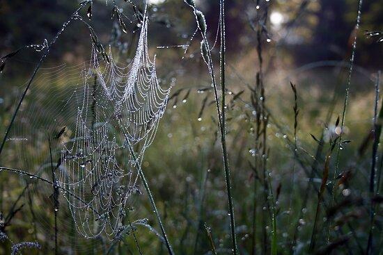Morning Magic by Jennifer Potter