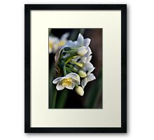 Almost ready to pick. Framed Print