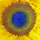 Flower of Sun by Cleber Photography Design