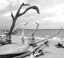 Boneyard Beach by Caren