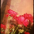 Roses r Red  by Rachels  Reflections