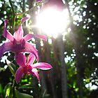 Purple, With a Splash of Sun by kathrynjoyphoto
