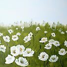 field of white poppies by Almeta