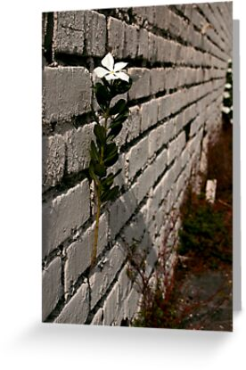 Wallflower by MMerritt