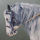 Gypsy Cob mare-Milltown Fair by Pauline Sharp