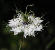 Alien Flower by photojeanic