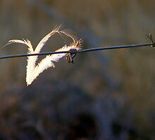 Feather on a wire by Antionette