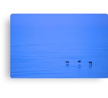 Cormorants Over Lake Ontario Canvas Print