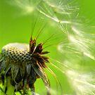 Seeds by Alana Ranney