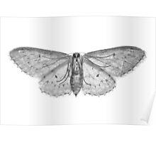 Moth... Poster
