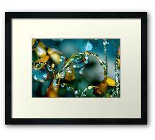 Summer Showers Framed Print