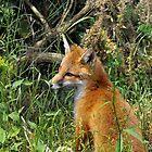red fox cub: Oh hurry up and come home Mum, I'm sooooooo hungry by Grandalf