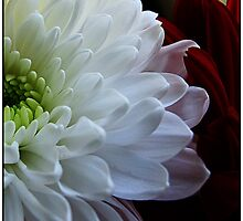 ~ Mums are beautiful ~ by Brenda Boisvert