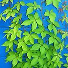 Vine on Blue  by clizzio