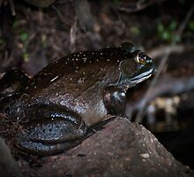 Frogger by Yvonne Roberts