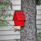 Red Bird House by kodakcameragirl