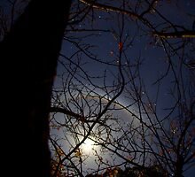 Luna Halo in our Backyard by CRSPHOTO