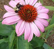A Busy Bee by Bethd821