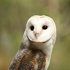 The Barn Owl by squidypoo