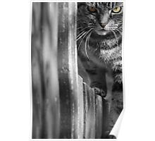 Cat on the Fence Poster