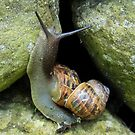 Snails version of 'Piggy back!' by sarnia2