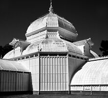 San Francisco conservatory of flowers by Jeffrey  Sinnock