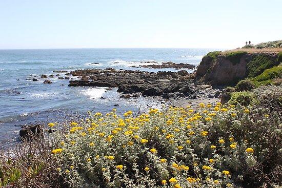 Otter Cove I by jdbussone