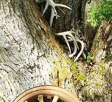 Old wheel by picturgrl