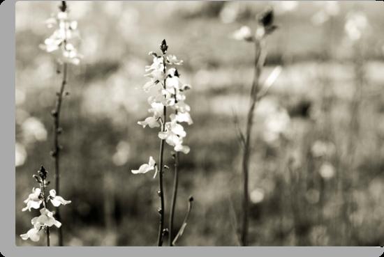 Wildflowers by Carina Potts