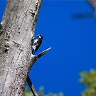 The Woodpecker by Timothy L. Gernert